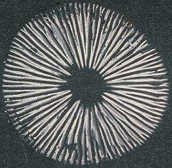 mushroom microscope